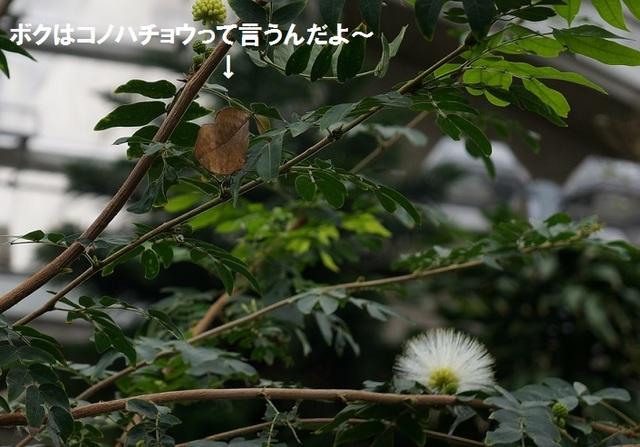 DSC09793.JPG